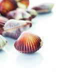 Sea shells 8x195g -50%_